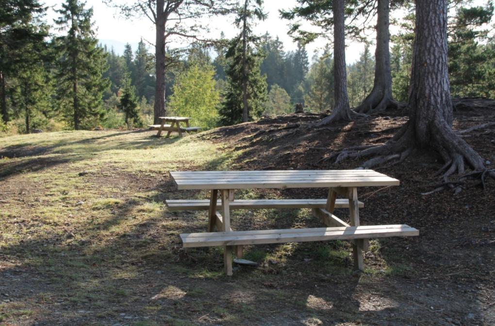 Nysnekra bord og benker i skogsområde i sol