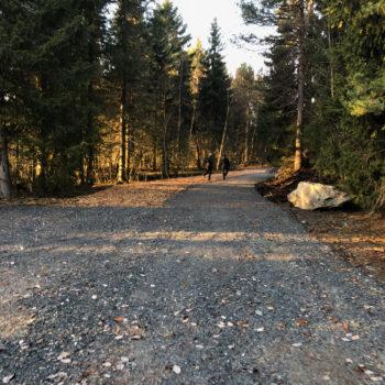 Sollys faller over nyanlagt skogsvei mellom høye trær