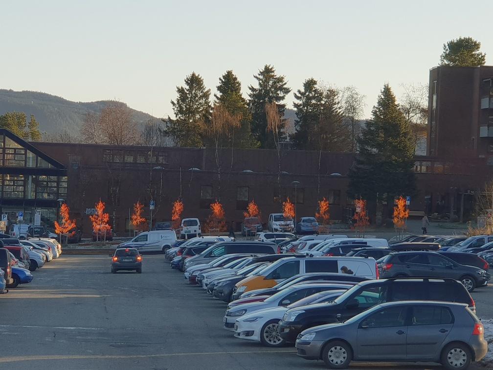 Høstlys faller på nyplanta trerekke som skiller parkeringsplassen fra torgområdet.